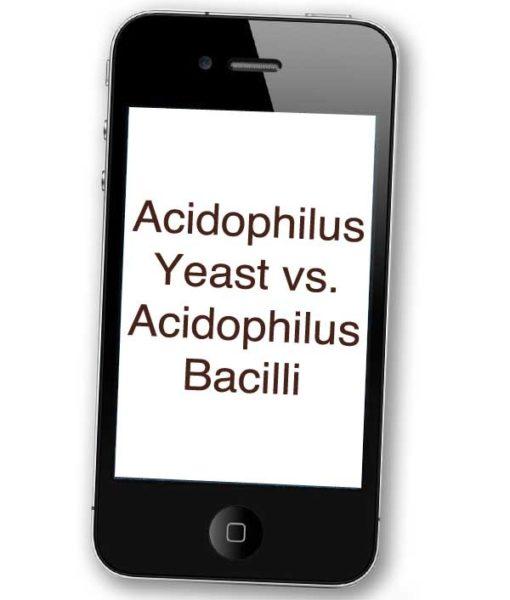 Acidophilus Yeast vs. Acidophilus Bacilli (MP3)
