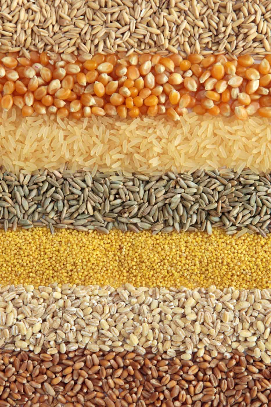 Whole Grain Foods Grocery List